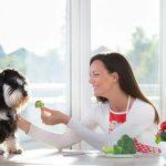 Les chiens peuvent-ils manger des légumes?
