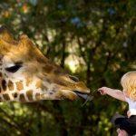 Les zoos alliés de la biodiversité