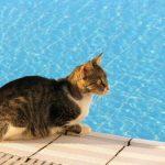 Comment les chats restent-ils au frais dans la chaleur?