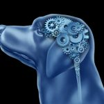 Les chiens peuvent-ils souffrir de trouble obsessionnel compulsif?
