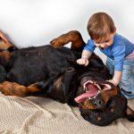 Les rottweilers se comportent-ils bien avec les enfants?