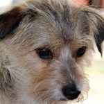Types de cancer chez le chien et leurs caractéristiques