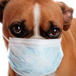 Principales allergies chez le chien, causes et traitement