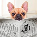 Mon chien a la diarrhée, que dois-je faire pour le guérir?