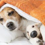 Un chien peut-il avoir des cauchemars?