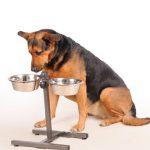 Avantages de la plaque surélevée pour chiens: mythe ou réalité?