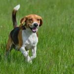 Quelles sont les races de chiens les plus énergiques