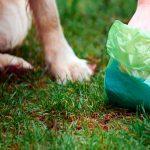 Remèdes à la maison pour guérir la diarrhée chez le chien