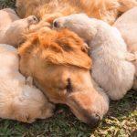 Comment fonctionne le système immunitaire du chien?