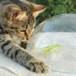 Je pense avec des insectes pour chiens et chats