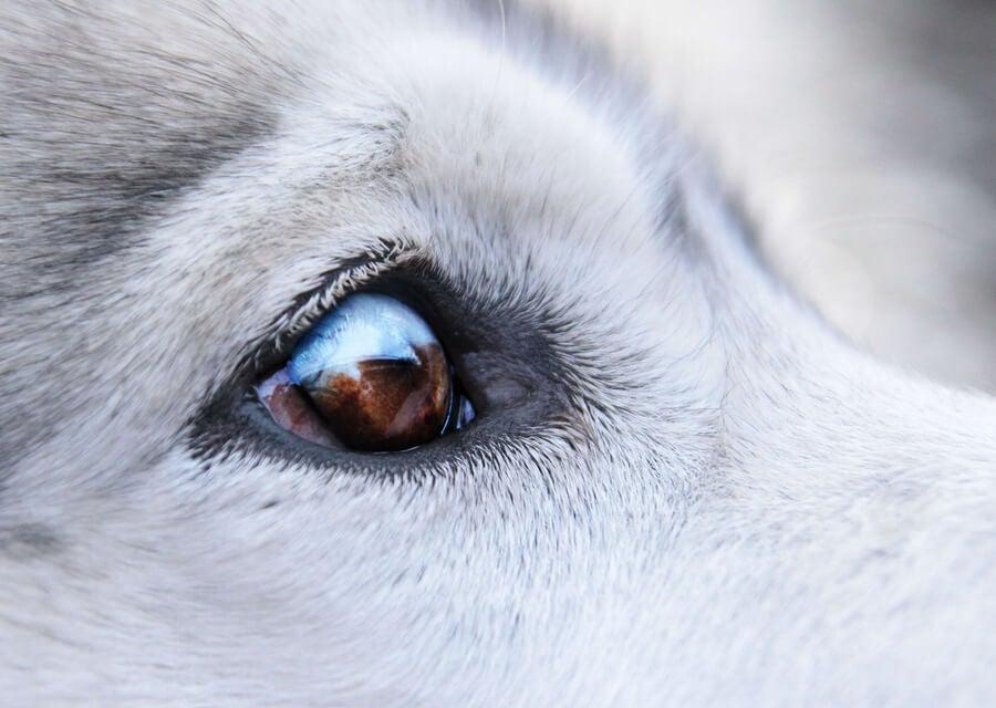 Koiran Syylät