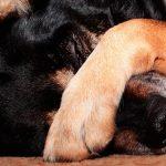 Mon chien a beaucoup de gaz - Causes et solutions
