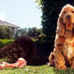 Mon chien cache ou enterre la nourriture. Pourquoi le fait-il?