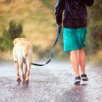 Que faire avec mon chien un jour de pluie