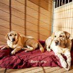 La résidence canine de Conductcan, notre quotidien