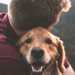 Dressage de chiens, influence du facteur humain