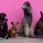 Formation canine en groupe