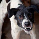 Comment savoir si un chien a la rage