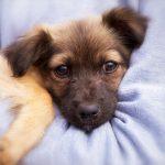 17 pathologies pouvant affecter votre chien