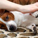 Arthrose canine - Symptômes, diagnostic et traitement