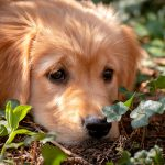 Parasites intestinaux chez les chiens