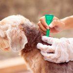 Qu'est-ce que la perméthrine et dans quel cas est-elle utilisée chez le chien?