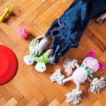 Grossesse psychologique chez les chiennes De quoi s'agit-il?