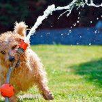 De combien d'espace un chien a-t-il besoin pour être heureux?