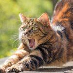 Comment repousser les chats avec un répulsif naturel