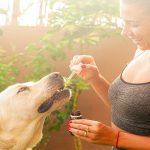 Que devraient manger les chiens souffrant de problèmes hépatiques?