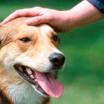 Comment bien accueillir un chien