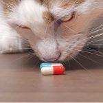 Onsior pour chats : posologie et effets secondaires