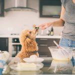 Les chiens peuvent-ils manger de la farine de blé ?
