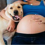 Les chiens détectent-ils une grossesse ?