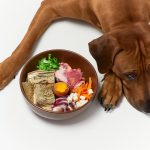 Mon chien ne veut pas manger : 10 causes et comment agir