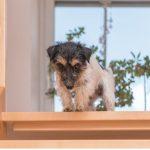 Mon chien a peur des escaliers : les causes et comment agir