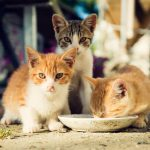 Soins aux chatons orphelins