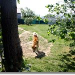 Chenil chien auvergne
