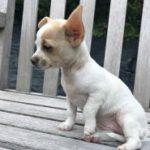 Chenil chien jodoigne
