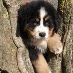 Chenil chien normandie