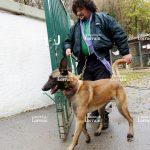 Chenil chien 28