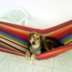 Chenil chien doubs