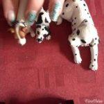 Chenil chien schleich
