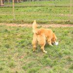Chenil chien mayenne