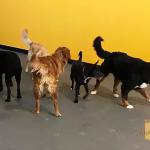 Chenil pour chien outaouais