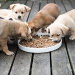 Le régime du chien en fonction de son âge