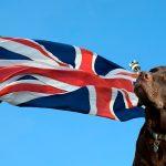 Races de chiens anglais