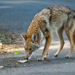 L'abus d'animaux sauvages est-il protégé?