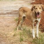 Perte de poids chez le chien? Maladies que vous pourriez souffrir