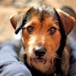 Comment habituer un chien à sa nouvelle maison